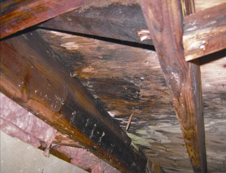 mold and rot in a Livingston crawl space