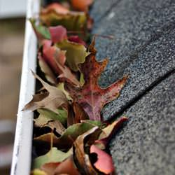 Clogged gutters filled with fall leaves  in Stanford
